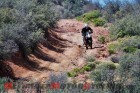Wickenburg Desert Ride - Report from the Trail